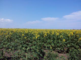 Ukrainian land